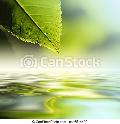 acqua, sopra, foglia - csp6514403