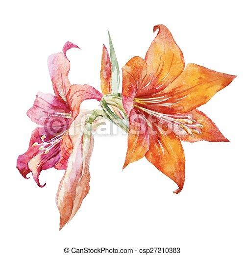 acquarello, fiori - csp27210383