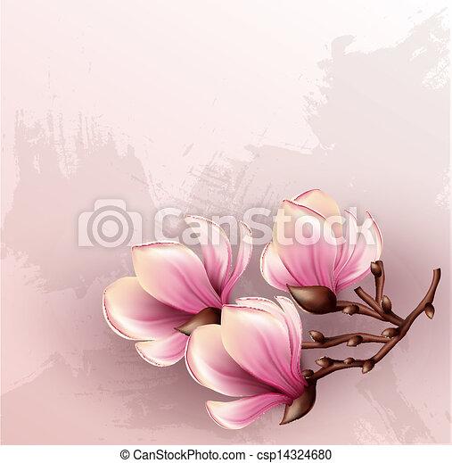 acquarello, magnolia, ramo, illustrazione - csp14324680
