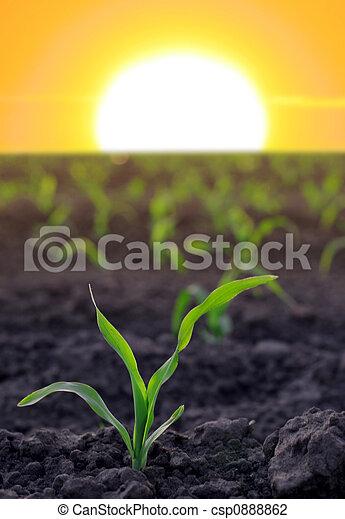 agricolo, granaglie, aumentare, zona - csp0888862