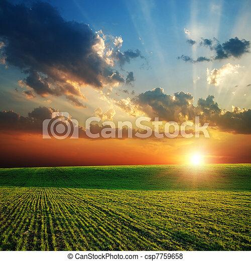 agricolo, verde, campo tramonto - csp7759658