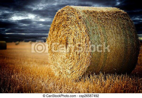 agricoltura - csp26587492