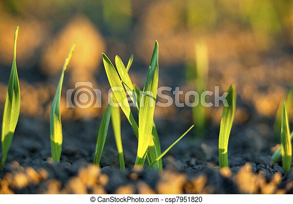 agricoltura, finlandese - csp7951820