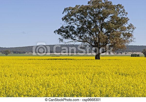 agricoltura - csp9668301