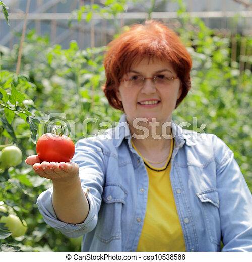 agricoltura - csp10538586