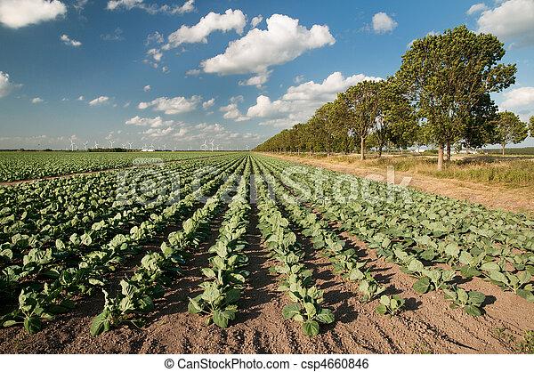 agricoltura, paesaggio - csp4660846