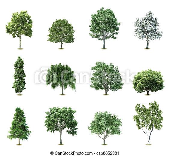 alberi., vettore, set - csp8852381