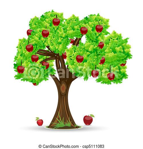 albero, mela - csp5111083