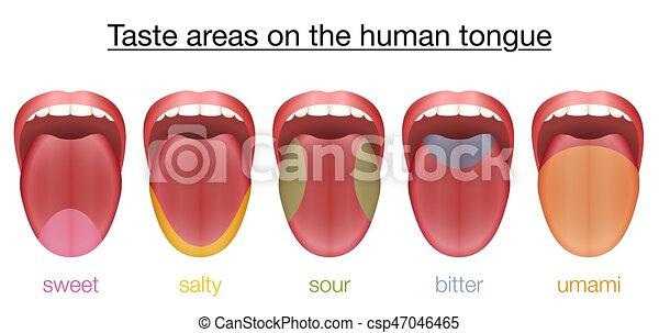 amaro, dolce, lingua, salato, gusto acido, umami - csp47046465