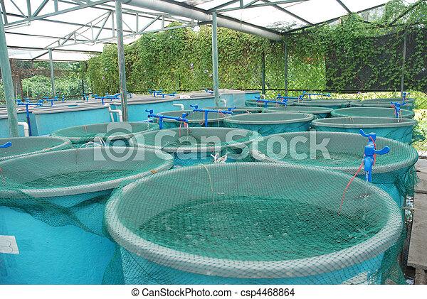 aquaculture, fattoria, agricoltura - csp4468864