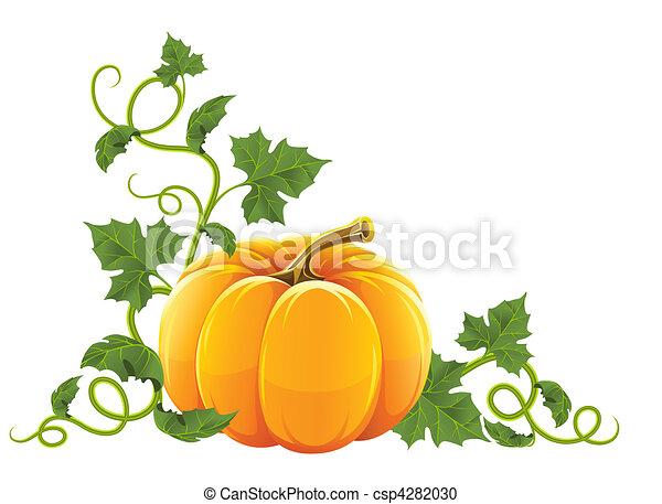 arancia, maturo, verdura, zucca - csp4282030