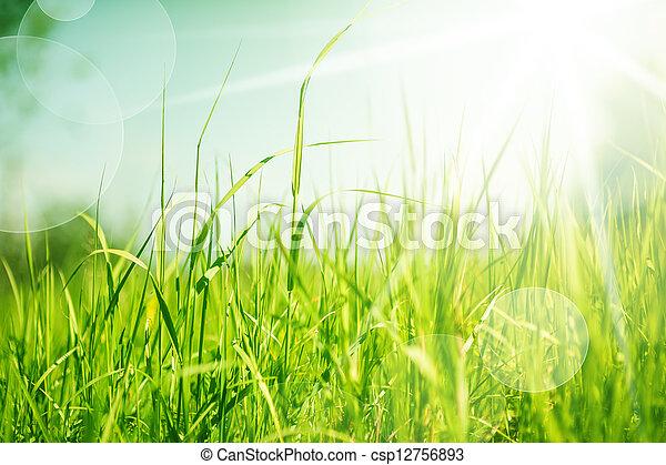 astratto, erba, fondo, natura - csp12756893