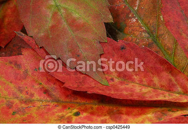 autunno parte - csp0425449