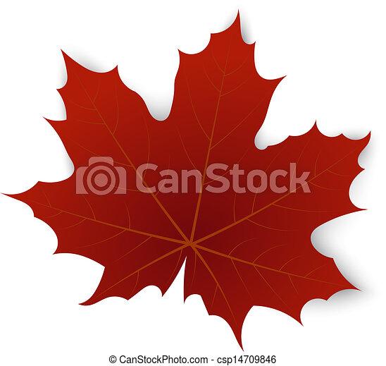 bianco, foglia, fondo, acero rosso - csp14709846