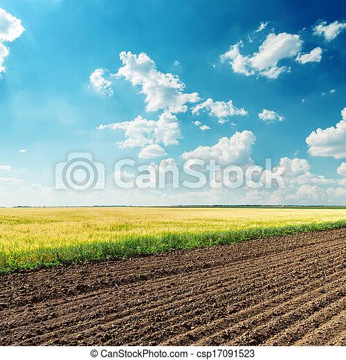 blu, campi, cielo, profondo, nuvoloso, sotto, agricoltura - csp17091523