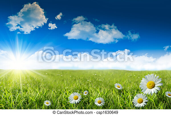 blu, erba selvaggia, cielo, margherite - csp1630649