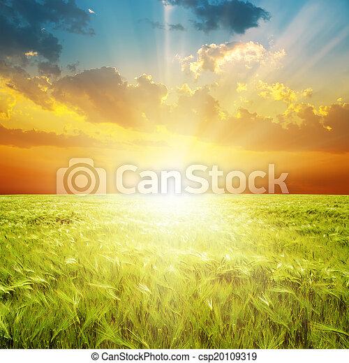 buono, sopra, campo, verde, arancia, tramonto, agricoltura - csp20109319