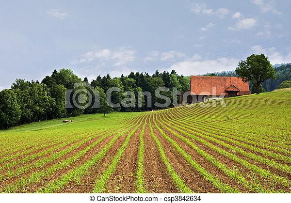 campi, agricoltura - csp3842634