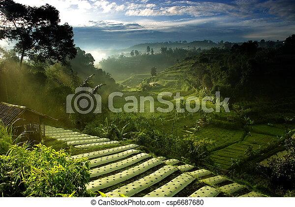 campo, agricoltura - csp6687680