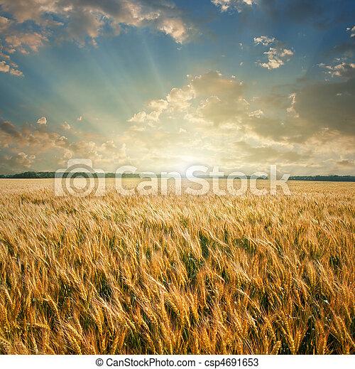 campo, frumento, tramonto - csp4691653