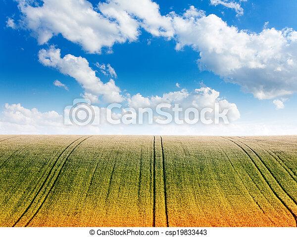 campo, ondulato, cielo, orizzonte, nuvoloso - csp19833443