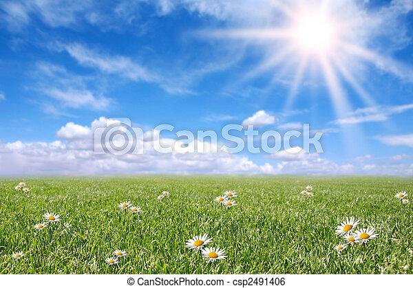 campo, primavera, soleggiato, sereno, prato - csp2491406