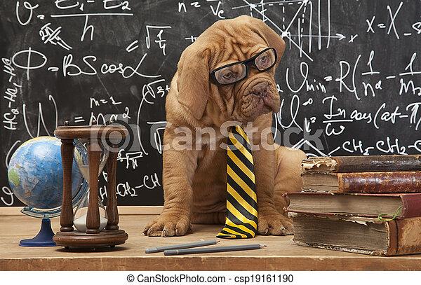 cane, educazione - csp19161190