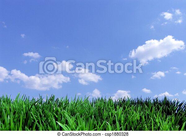 cielo blu, erba, verde - csp1880328