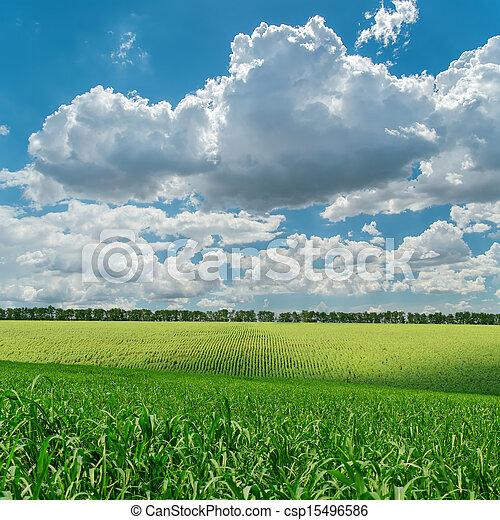 cielo, nuvoloso, campo, verde, sotto, agricoltura - csp15496586