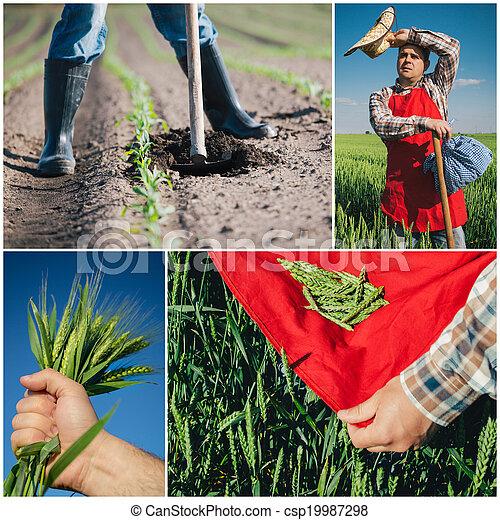 collage, agricoltura - csp19987298
