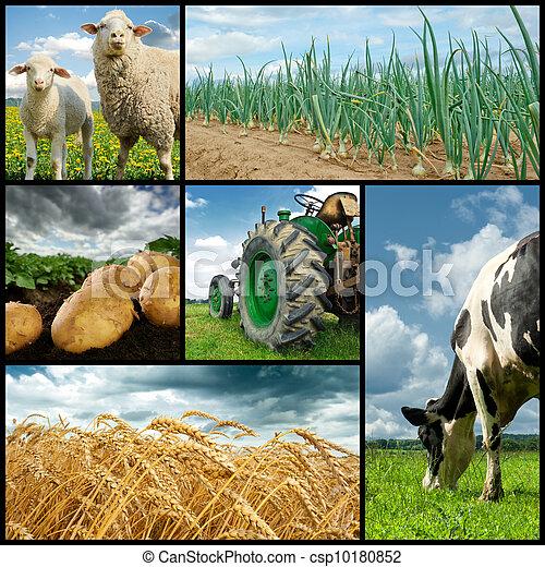 collage, agricoltura - csp10180852