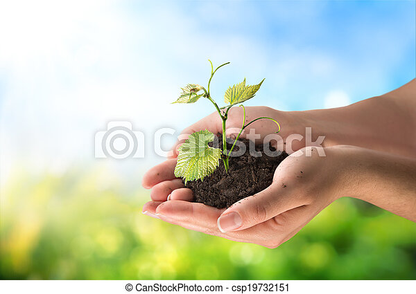 concetto, agricoltura, poco, pianta - csp19732151