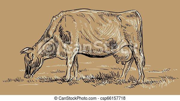 cow2, vettore, disegno, mano - csp66157718