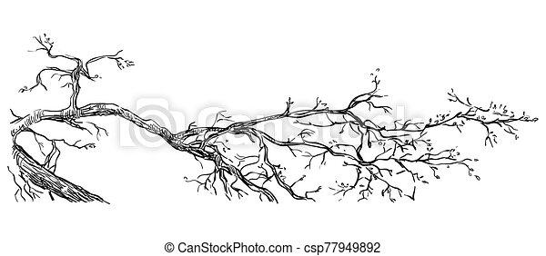 disegno, vettore, ramo, mano - csp77949892