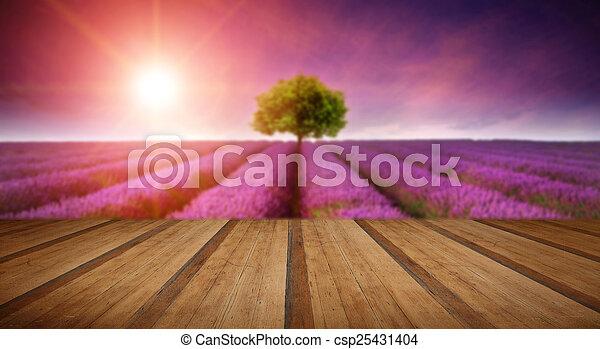 estate, albero, lavanda, tramortire, campo, singolo, tramonto, paesaggio - csp25431404