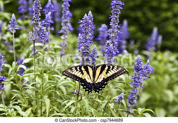 farfalla, natura, estate, verde - csp7944689
