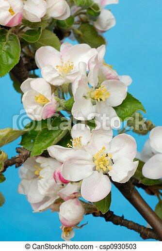 fiori, mela - csp0930503