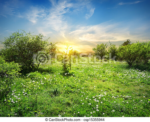 fiori, soleggiato, prato - csp15355944