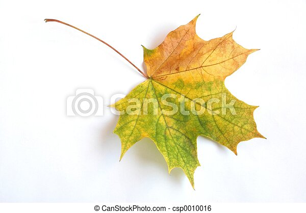 foglia autunno - csp0010016