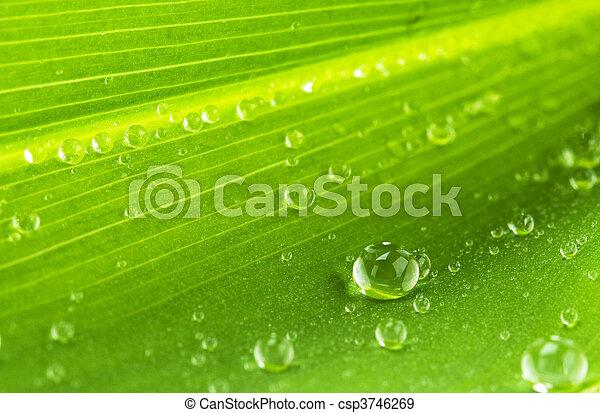 foglia, gocce, acqua verde - csp3746269