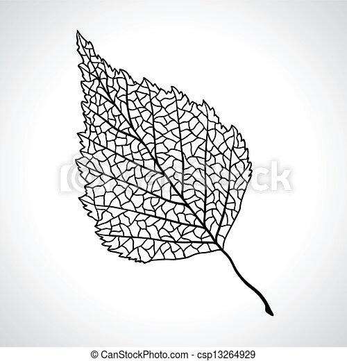 foglia, isolated., macro, albero, nero, betulla - csp13264929