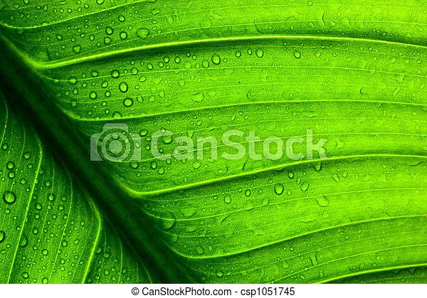 foglia, struttura, verde - csp1051745