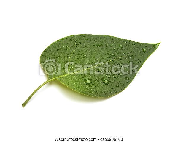 foglia verde - csp5906160