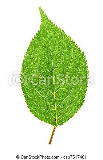foglia verde - csp7517461