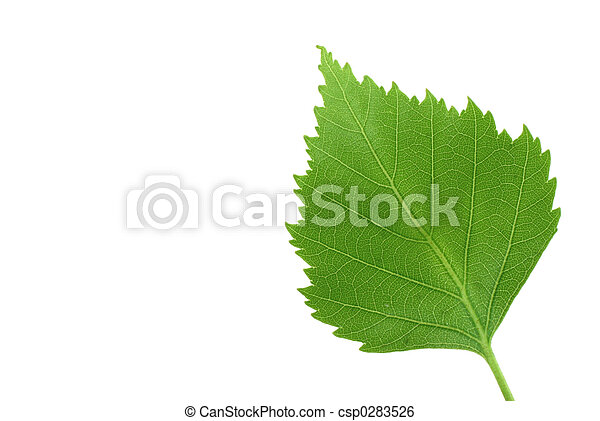 foglia verde, puro, w - csp0283526