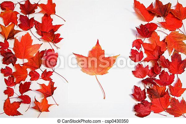 foglie, acero rosso - csp0430350