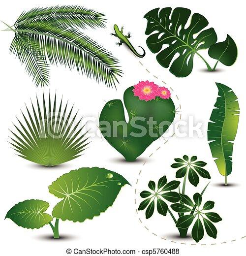 foglie, collezione, tropicale - csp5760488