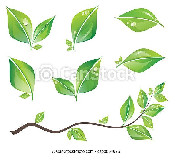foglie, set, verde - csp8854075