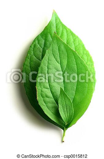 foglie tre - csp0015812
