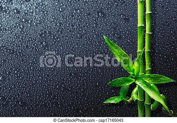 fondo, -, bambù, terme, gocce - csp17165043